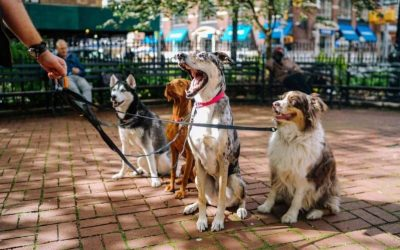 How To Choose The Best Leash